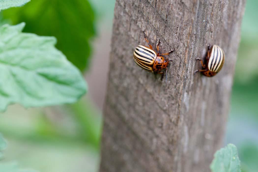 insektycydy
