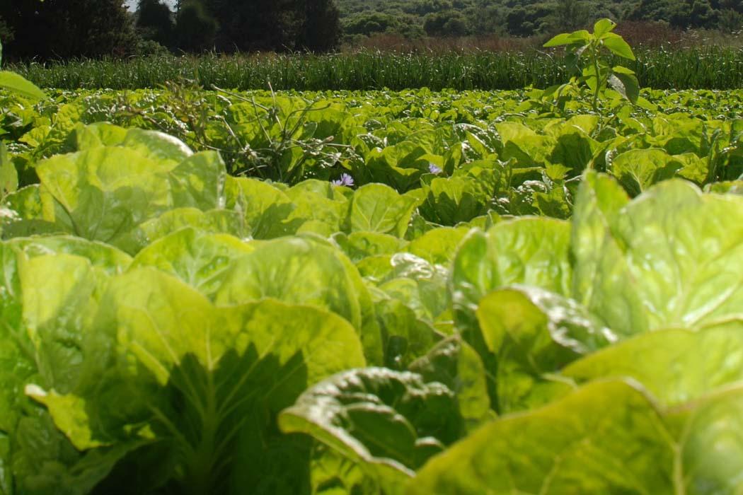 wapń w rolnictwie