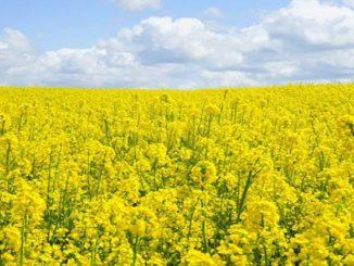 Jak chronić rośliny uprawne?