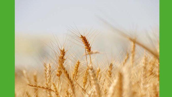 Jak chronić rośliny uprawne? Jak chronić rośliny uprawne