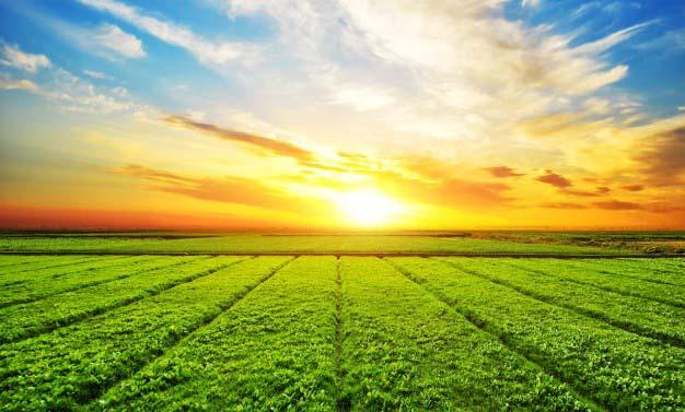zasady zrównoważonego rolnictwa