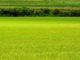 cesja umowy dzierżawy gruntu