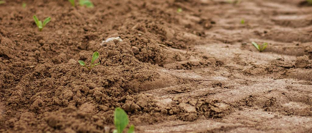 Jak uprawiać różne gatunki gleb