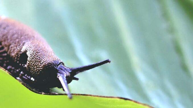 Zwalczanie ślimaków