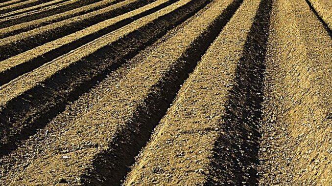 Co warto wiedzieć o glebie